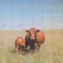 Printed Vertical Blind - Cow