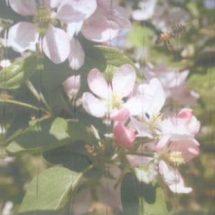 Printed Vertical Blind - Flowers